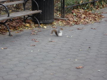 the squirrel of authenticity