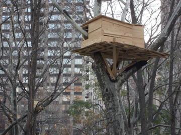 tree-hut