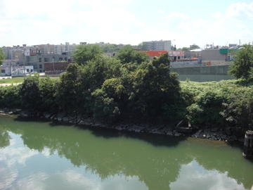 bronx river bank