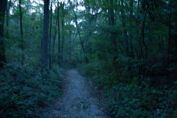 the path grows dim