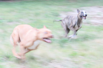 doggies in motion